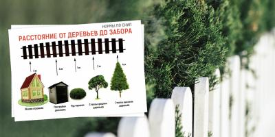 Расстояние от деревьев до забора – нормы посадки по СНИП