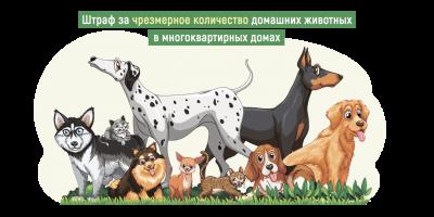Предложен новый штраф за численность содержания домашних животных