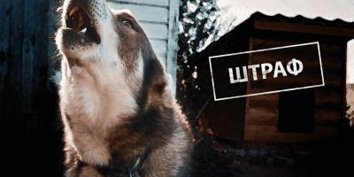 В России начнут штрафовать за ночной лай собак и неисправные сигнализации
